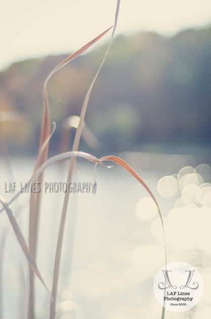 LAF_5600